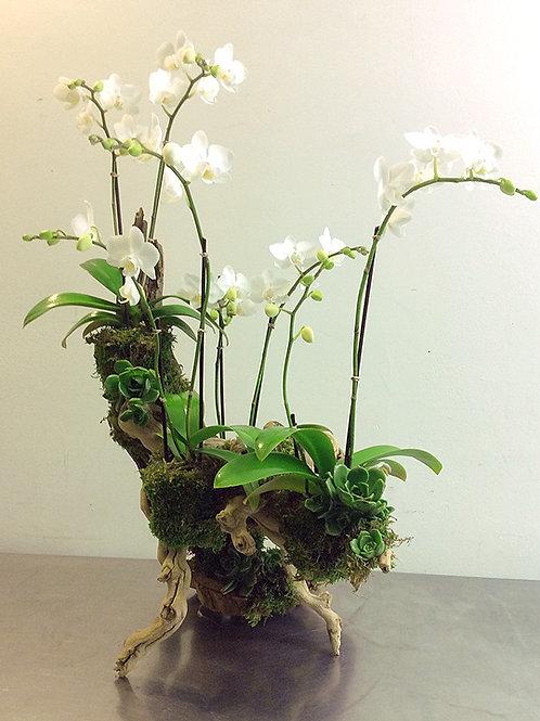 Mini White Orchids on Grapevine