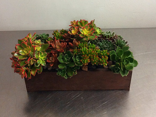 Assorted Succulent Box