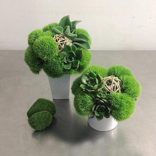 Mini Green Duo