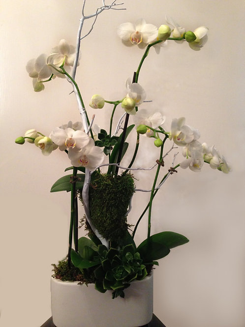Mini Orchids in Small Oval