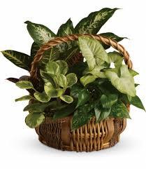 Dish Gardens & Plants: Elaborate