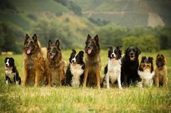 Onze honden.png