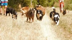 Onze honden in Wintrich.png
