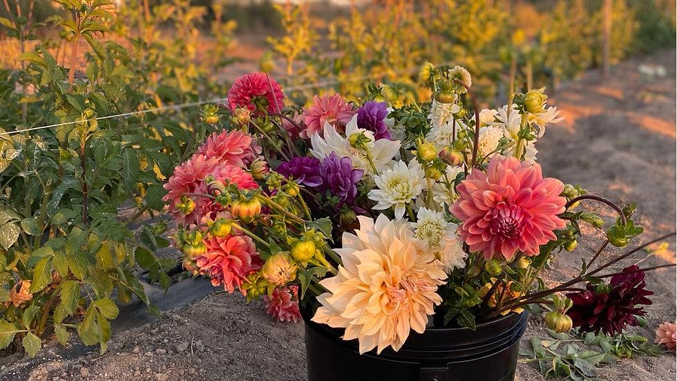 Bucket of Seasonal Blooms
