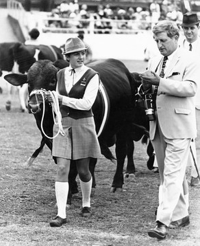 Cattle handler leading her cattle at the