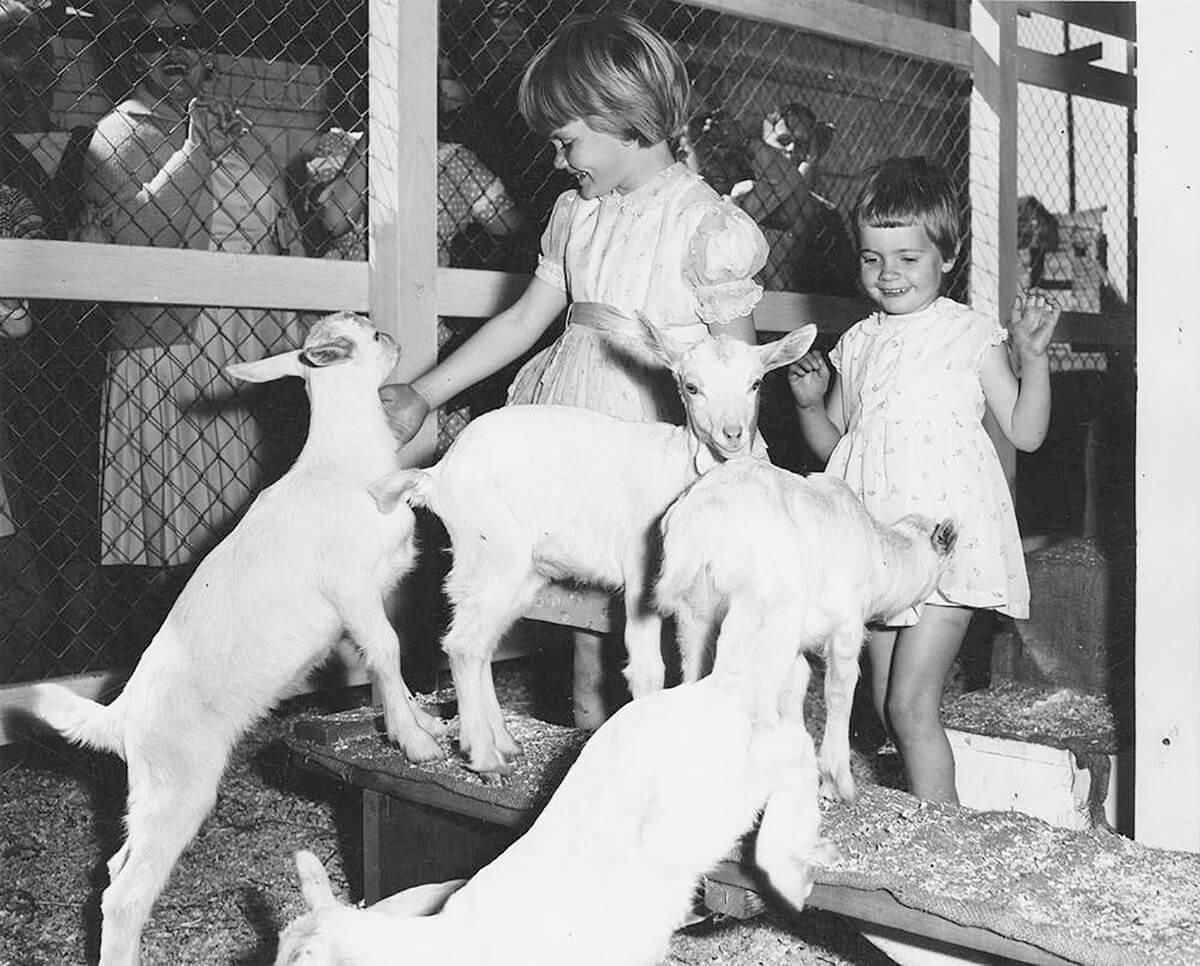 Two young girls petting baby goats at th
