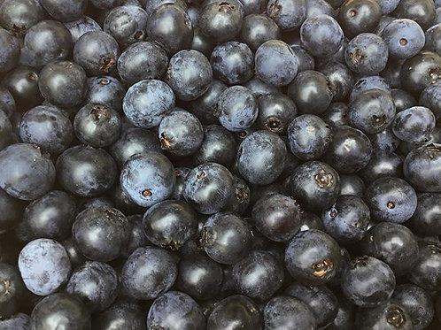 朝摘みブルーベリー 1kg〈無選別〉