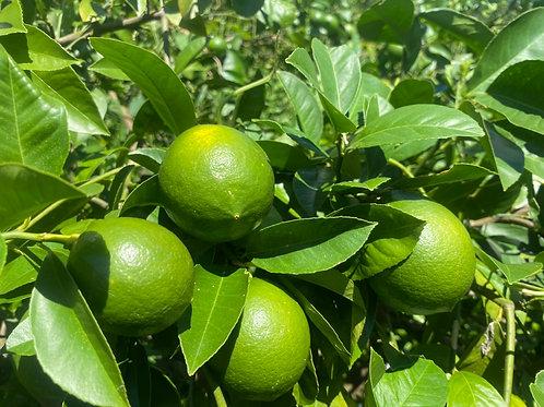 マイーヤーレモン5個(グリーンレモン)