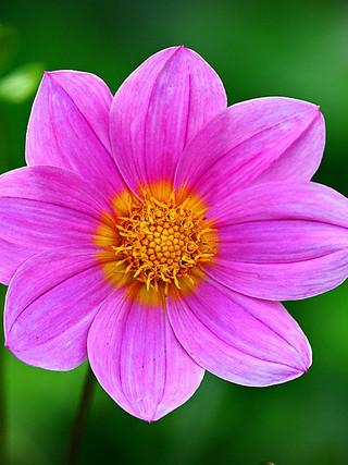 3. Цветок