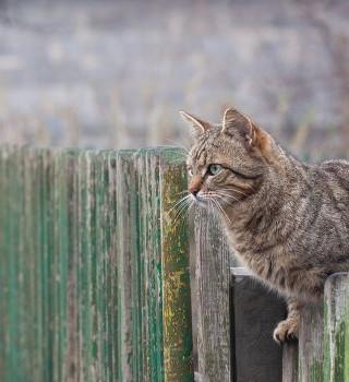 136. Притча про кота