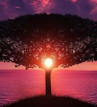142. Волшебное дерево