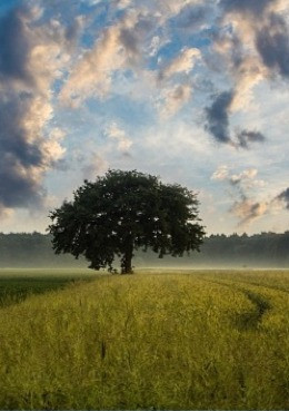 1. Дерево