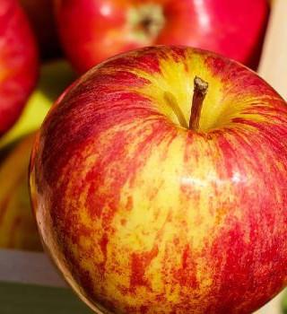 4. Ведро с яблоками