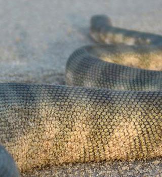152. Змея-спаситель