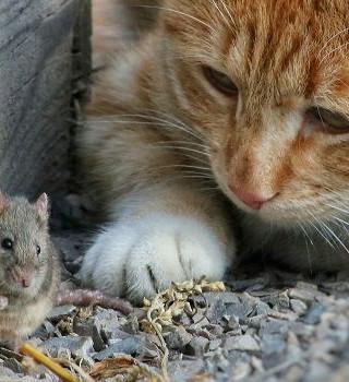 45. Благородная мышка