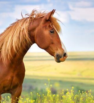 108. Сознание и осёдланная лошадь
