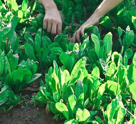photo-plant-care1.jpg