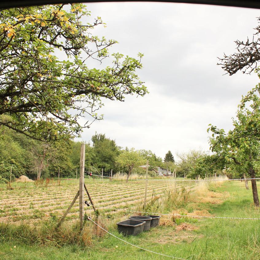 Grüner Weg in Kronberg