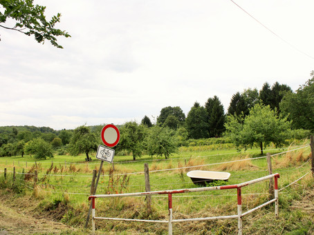 KfB möchte das Gebiet um den Grünen Weg als Biotop erhalten