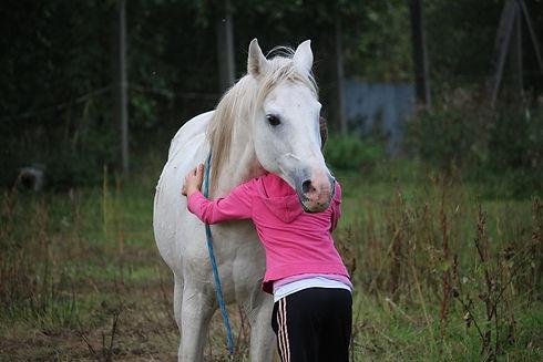 horse-958320_1920.jpg