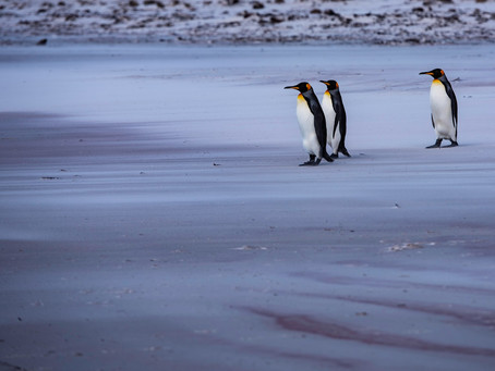 3 Exciting Things to do While Visiting the Falkland Islands
