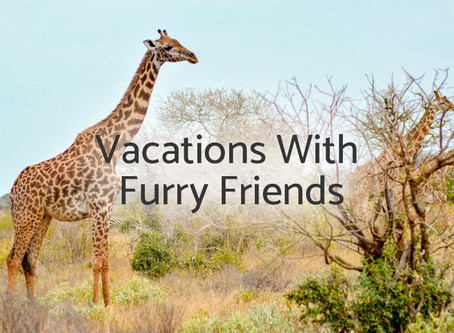 Lions, Tigers, Bears, Oh Fun! — Vacations With Furry Friends