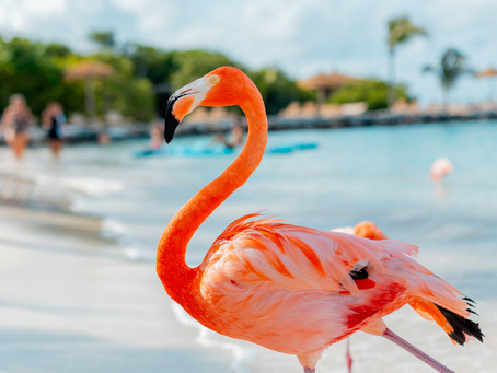 Why An Aruba Destination Wedding Is Perfect for You