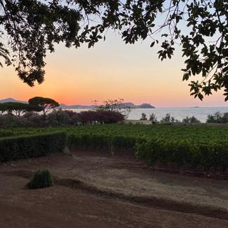 I vitigni della tenuta