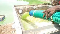 Algae removal.png