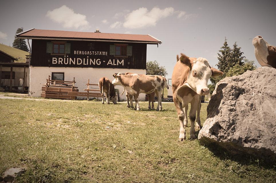 Bruendling Alm Hütte Berggaststätte
