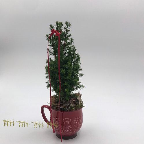 Weihnachtsbäumchen in Tasse