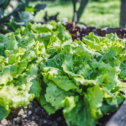 Unikum - Salat-Pflanzerl