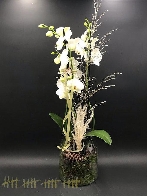 Orchidee weiß im Glasgefäß