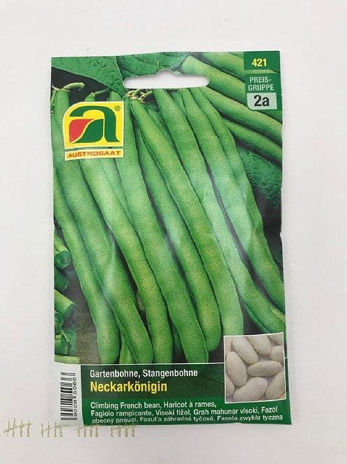 Gartenbohne, Buschbohne, Processor - Saatgut
