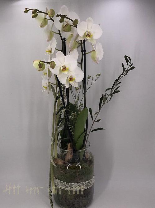 Weiße Orchidee im Glasgefäß