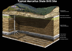 Typical_Marcellus_Shale