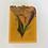 Thumbnail: Vanilla Clove
