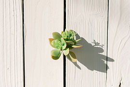green-plant-on-white-wooden-surface-4068