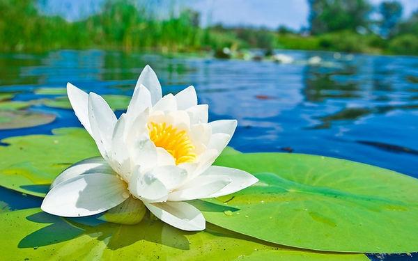 Nina Minagawa, Mindfulness, Meditation, DBT EMDR, Multicultural