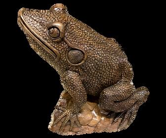 Big Teak Frog
