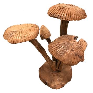 Mushrooms Cluster