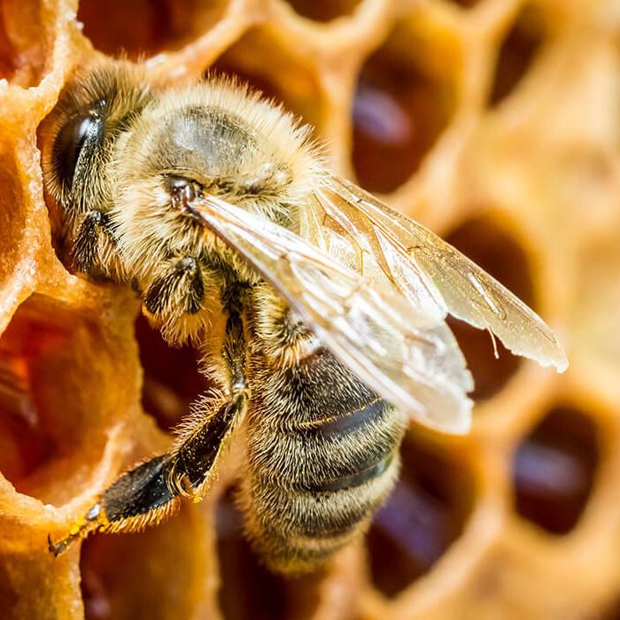 Von der Biene zum Honig (ab 2. Klasse)