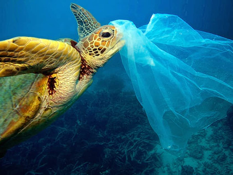 What happens to the plastic you throw away?