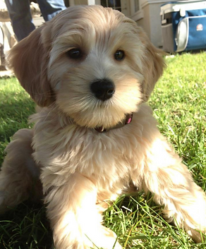 marley pup.png