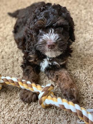 Bandit as Pup Pic.jpg