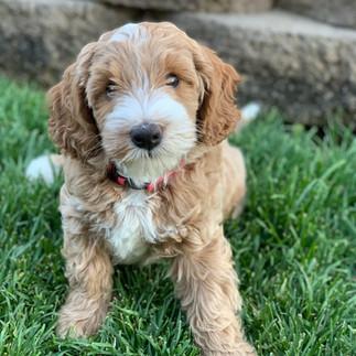 Ellie as Pup Pic.jpg