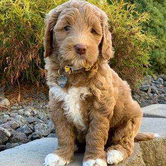 Ms Charlie Pup Pic.jpg
