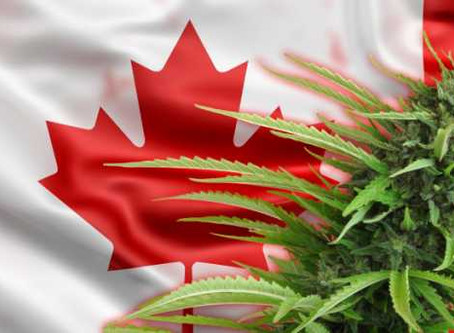 Canadian woman faces lifetime ban for carrying CBD oil into U.S.