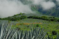 seminarios de tequila
