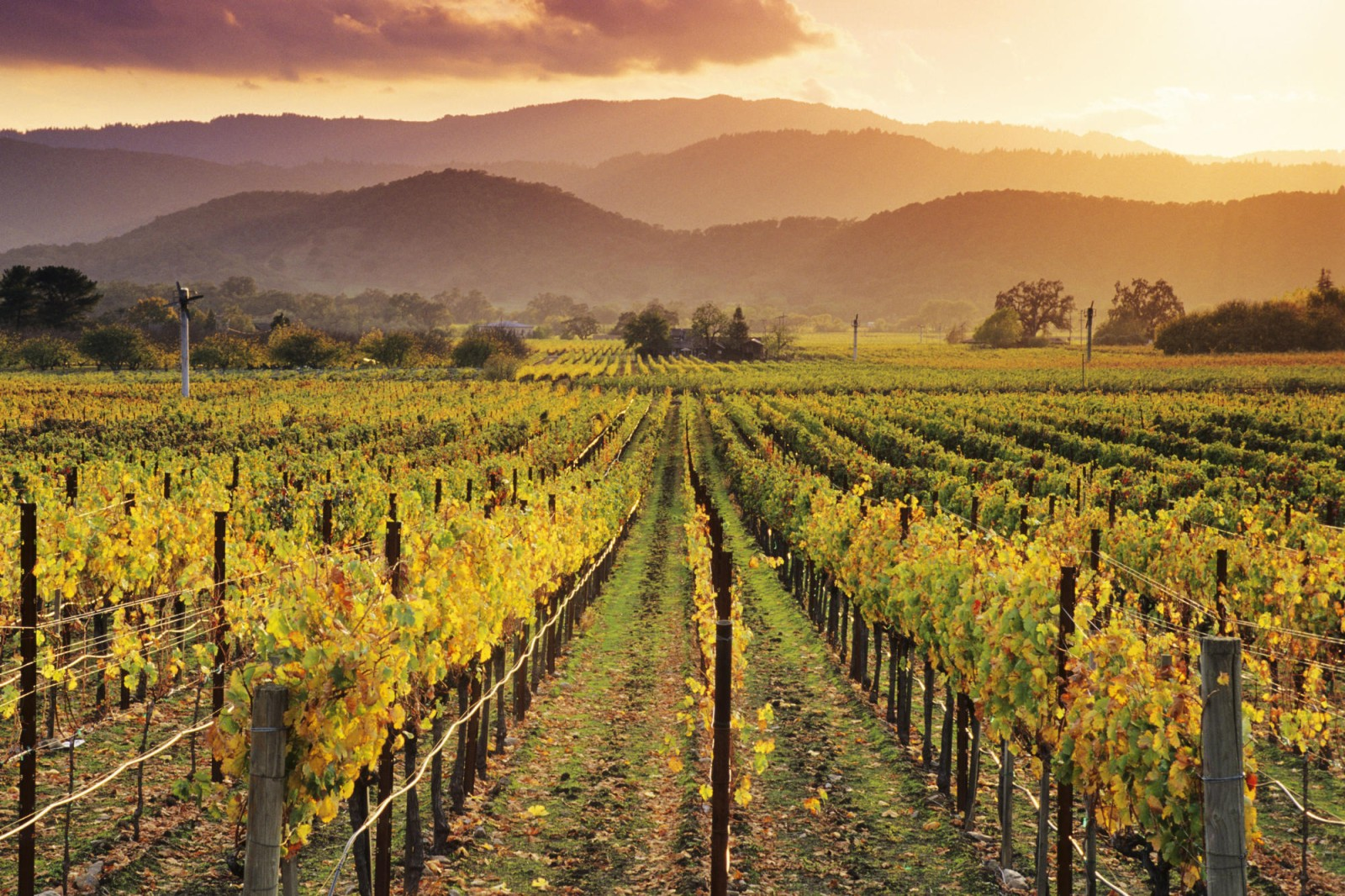 El maravillo mundo del vino